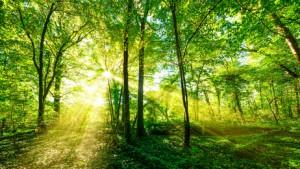 Wald Panorama im goldenen Sonnenschein